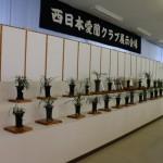 2014年3月山野草展示会